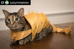 Something we liked from Instagram! Repost @luckymintphoto with @repostapp  3D Printed Battle Armour for Cats  #3dprint #3dprints #3dprinting #3dprinted #3dprinter #3dprinters #fdm #reprap #ultimaker #makerbot #prusa #mendel #prusai3 #maker #delta #diy #likeforlike #makerlabdhaka #dhaka #bangladesh #cat #cats #battle #battlearmour #armour #cosplay #costume #adorable #cute #badass by makerlabdhaka check us out: http://bit.ly/1KyLetq