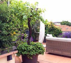 verde in città giardinieri a milano | terrazzi