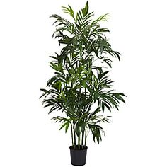 6 ft Bamboo Palm Silk Tree   Overstock™ Shopping - Great Deals on Silk Plants