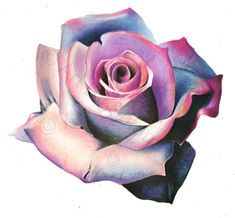 pencil drawing ideas ORIGINAL Colorful Flower Drawing - Blue and Pink - Wall Art - Colorful Flower - Realistic Flower Drawing, Realistic Drawings, Colorful Drawings, Rose Sketch, Flower Sketches, Flower Drawings, Abstrakt Tattoo, Pencil Drawing Tutorials, Drawing Ideas