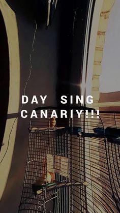 """Видео из альбома """"Ganary sings !! Канарейки пение!!"""" - GoogleФото"""