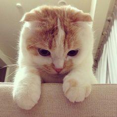 Poookke the cat