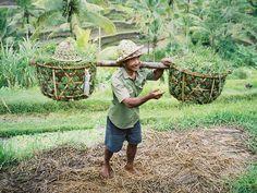 Farmer - Bali, Bali