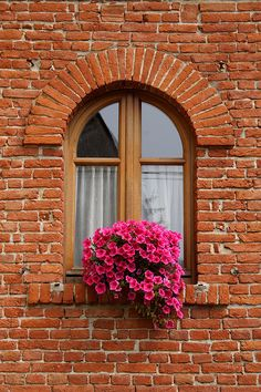 Window with flowers - Italy