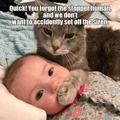 207ceb0c3c Where is the plug  https   cheezburger.com 9230935040. Funny Animal MemesCute  Funny AnimalsCat ...