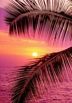 """🌟Tante S!fr@ loves this📌🌟passionplenty: """" Palm trees and ocean at sunset, Hawaii by John Warden on Getty Images """""""