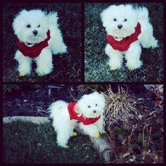 My baby dog stormy