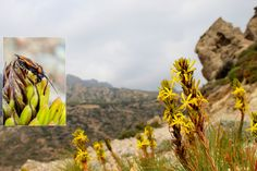 https://flic.kr/s/aHskBpjWNq   156 Full Circle   We find out who's eating all the #Orchids, what the Victorians did with #Chaffinches plus; What exactly is a Cockchafer (and does it hurt?) as the #CreteNature blog goes Full Circle bit.ly/40Saints_Full_Circle