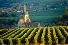 bright yelow and green on soft neutral tones - french vineyards - Google Search