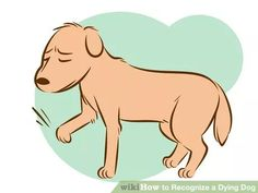 Image titled Recognize a Dying Dog Step 3