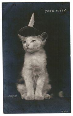 Vintage CAT Postcard 1906 RPPC Kitten ROTOGRAPH by CatCuriosities