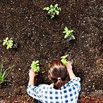 Edible gardening ideas - a bunch of articles.