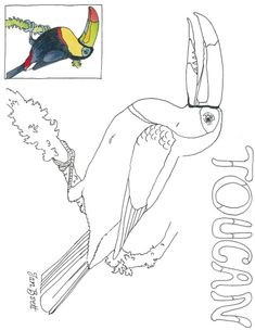 Cloud Forest Toucan Coloring Page