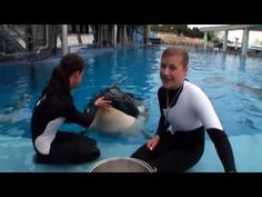 Did you know THIS about killer whale collection and research?  SeaWorld hasn't collected a killer whale in over 35 years. | SeaWorld® - YouTube