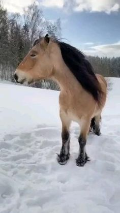 Funny Horses, Cute Horses, Pretty Horses, Horse Love, Beautiful Horses, Super Cute Animals, Cute Funny Animals, Cute Baby Animals, Animals And Pets