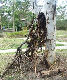 let the children play: Building a house of sticks