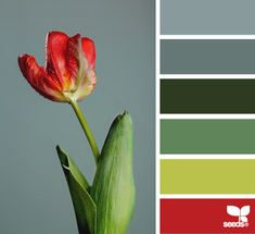 flora hues color palette from ColorSeeds. Blues, greens and a pop of red Hue Color, Colour Pallette, Color Palate, Colour Schemes, Color Combos, Color Patterns, Palette Deco, Design Seeds, Color Studies