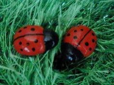 Red Ladybug Polymer Clay Earrings with by StariasCreations on Etsy, $11.00