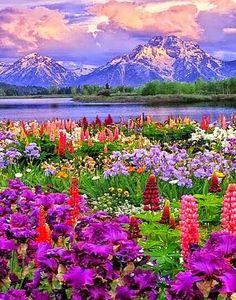 wildflower - Google keresés