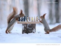 Squirrels Playing Chess in the Snow -Russian Photographer Vadim Trunov Takes the…