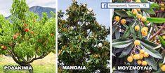 18 Ιδιαίτερα Δέντρα για να Μεταμορφώσετε Ευχάριστα έναν Μικρό Κήπο & την Αυλή Σας ! - share24.gr