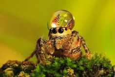 Silly Photos of Spiders Wearing Water Droplets as Hats - My Modern Metropolis
