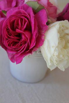 Trouvais roses: Deuil de Dr. Reynaud