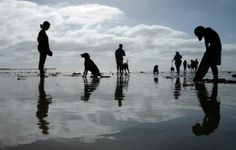 Dogs and their owners play under sunny skies at Ocean Beach.