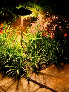 Path lights are visual aids in a dark space, but they also add color and texture if you place them near interesting plants. This way, you can retain pieces of your garden's charm long after the sun sets.