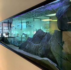 Searching for aquarium backgrounds? You can choose among 8 different type of aquarium backgrounds. Fish Aquarium Decorations, Wall Aquarium, Tropical Fish Aquarium, Aquarium Setup, Tropical Fish Tanks, Aquarium Design, Marine Aquarium, Aquarium Fish Tank, Planted Aquarium