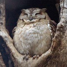 Now what more could an owl want? Besides a bit of mouse fricassee, of course...
