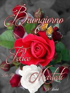 Buongiorno felice martedì Christmas Ornaments, Holiday Decor, Rose, Flowers, Tuesday, Candy, Buen Dia, Bonjour, Italy