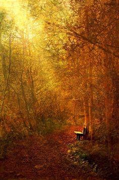 autumn light through trees