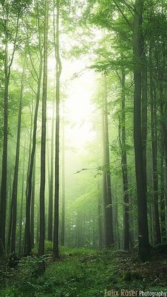 Grove of trees (Bavaria, Germany) by Felix Röser / 500px