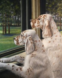 English Setter - these gorgeous dogs! Beautiful Dogs, Animals Beautiful, I Love Dogs, Cute Dogs, Animals And Pets, Cute Animals, Labrador, Mundo Animal, Hunting Dogs
