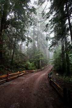 Forest Road, Vancouver, British Columbia,