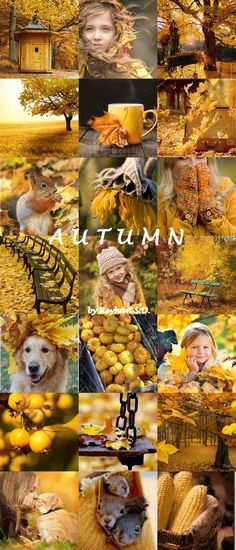 '' Autumn Shades of Yellow '' by Reyhan Seran Dursun