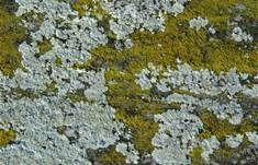 lichen - 必应 Bing 图片