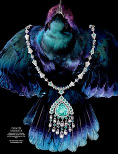 Still life and jewellery photographer Omer Knaz recently shot this Tatler promotions, 'Flight of fancy'. The concept is all about exotic luxurious jewels and diamonds.