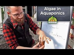 Algae in Aquaponics - YouTube