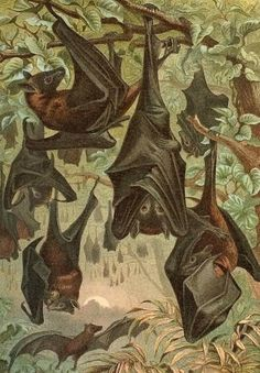 1894 eerie bat scene original antique print by antiqueprintstore