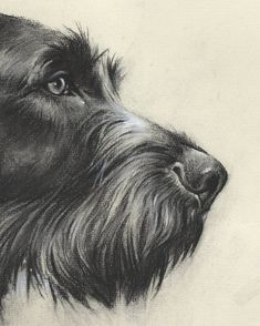 """Graphic portrait """"German wirehaired pointer"""" by Valery Siurha, gwp, gwp pointer, dog art, gwp point Dog Anatomy, Griffon Dog, Hunting Dogs, Grouse Hunting, German Wirehaired Pointer, Cool Art Drawings, Drawing Skills, Dog Portraits, Dog Art"""