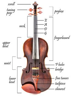 Are you a first time learner looking to find out more about the parts of your new violin? Or simply curious? Either way, you're in the right place. We'll cover every part of the violin and also tell you how to fix it if it breaks. Music Lessons For Kids, Music For Kids, Good Music, Violin Instrument, Violin Parts, Cello, Violin Sheet Music, Piano Music, Zona Musical