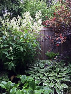 Part 2: Small Space, Big Impact | Fine Gardening - Garden in Edmonds, Washington