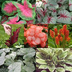 instant shade garden collection