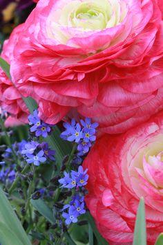 ~~Forget-Me-Nots & Ranunculus by Gisela Müller-Mohaupt~~