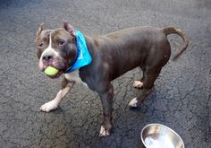 ARBY- A1053614 -MANHATTAN- 4YR OLD ADORABLE BOY! 2 B KILLED 2NIGHT 10/10/15 OR EARLY 2MORROW MORNING! TERRIFIED, HEARTBROKEN N FEELIN COMPLETELY ABANDONED, ALL ALONE SCARED N DUMPED HERE 2 B KILLED! WE R PRECIOUS SWEET ARBY'S ONLY VOICE N HOPE 4 SURVIVAL OUT OF HERE, ALIVE! WONT U PLZ HELP MAKE THIS KIND DARINGS LAST WISHES COME TRUE? LOVE LIFE N A 4EVER HOME:)) CHOOSE LIFE, NOT DEATH!! P ADOPT!