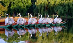 swan boats - Google Search