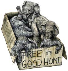 "Aw! Free to a good home. I want one! Or is this a ""Crazy Elephant Lady Starter Kit""?"
