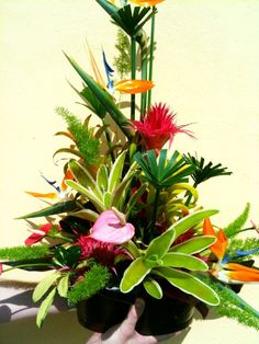 Tropical with bird of paradise and anthurium